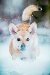 Mischlingshund im Schnee