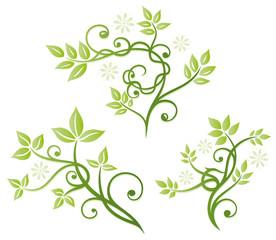 Blätter, Laub, Ranken, vector set green