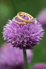 Gold wedding rings on beautiful blossom