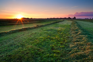Fototapete - clipped hay on grassland at sunrise
