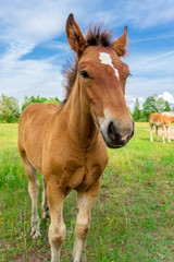 Young funny horse