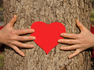 Hands on a tree.St. Valentine's Day