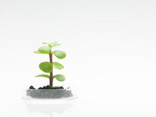 plant with soil growing in petri dish
