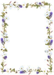 Purple ginger and white sky flower vine border isolated on white