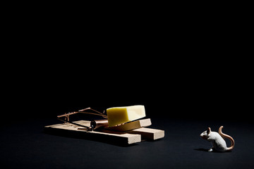 mouse and cheese in a mousetrap