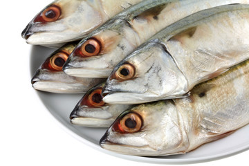 A dish of fresh Short-bodied Mackerel, isolated on white