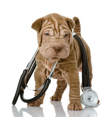 shrpei puppy dog with a stethoscope on his neck. isolated