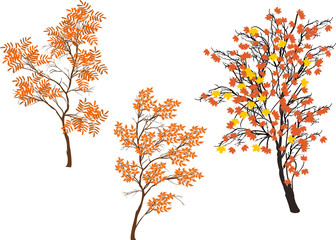three orange fall trees isolated on white