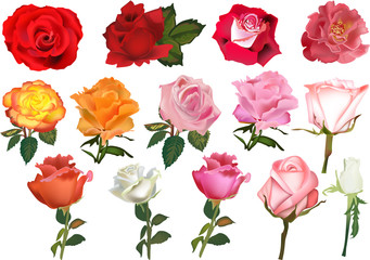 fourteen color roses collection isolated on white