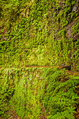 Moss wall with fern nearby