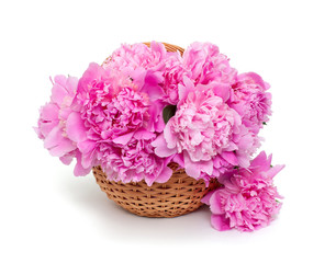 basket of peonies isolated on white background