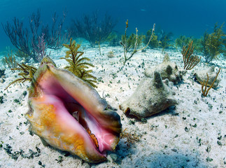 conch shell in an underwater seascape