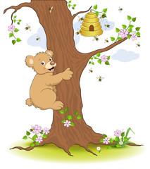 Bär klettert am Baum zum Honigstock