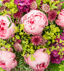 closeup of beautiful pink peony flowers