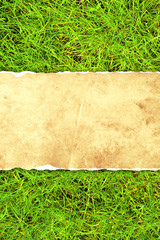 Wall Mural - Green grass and paper