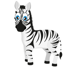 Cute baby zebra cartoon, vector illustration