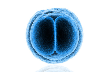 Zygote Cell