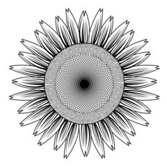 sunflower out line vector