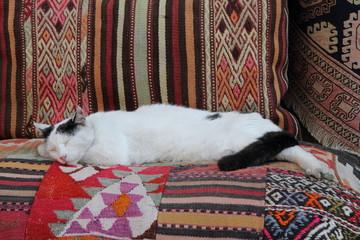 Cat sleep on Turkey carpets
