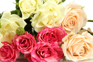 Beautiful colorful roses close-up isolated on white