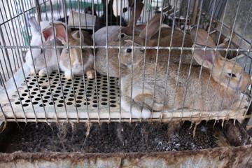 Rabbit prison