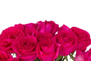 mauve roses border