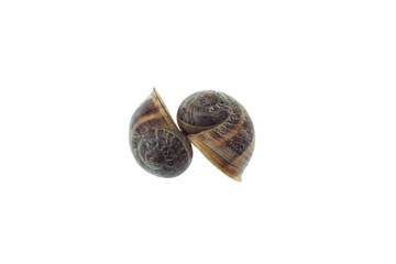 isolated snail shell