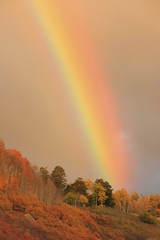 Fototapete - Rainbow over aspen forest, Colorado