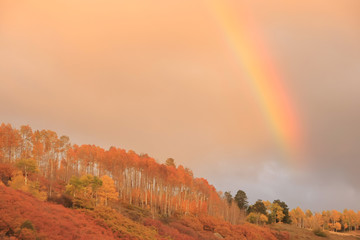 Wall Mural - Rainbow over aspen forest, Colorado