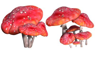 Mushrooms, fly agaric