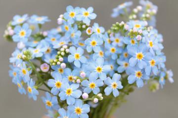 Obraz Bouquet of forget-me-nots flowers - fototapety do salonu