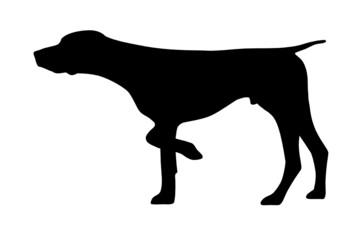 Deutsch Kurzhaar Vorstehhund