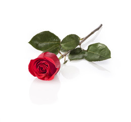 long stem red rose isolated on white