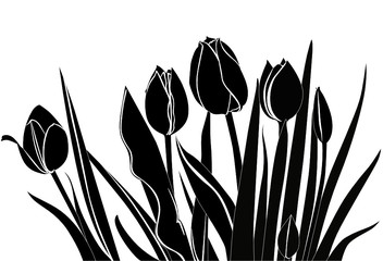 Photo on textile frame Floral black and white tulips flowers it is isolated