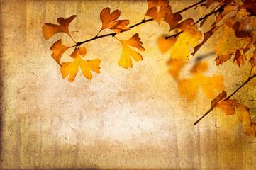 Feuillage de ginkgo en automne, vintage