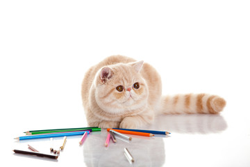 cat with pencils isolated on white background