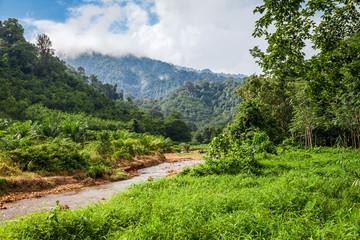 A small river in jungle