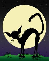 Black cat illustration.