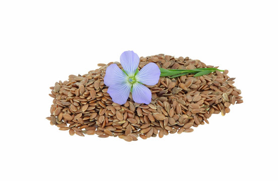 Flax Flower and seeds