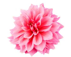 Poster de jardin Dahlia pink dahlia