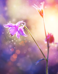 Wall Mural - Flowers. Floral Abstract Purple Design. Soft Focus