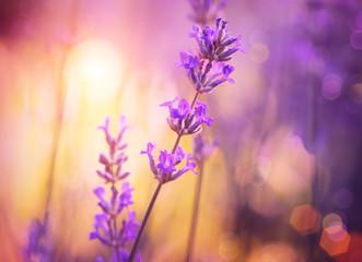 Fotoväggar - Flowers. Floral Abstract Purple Design. Soft Focus