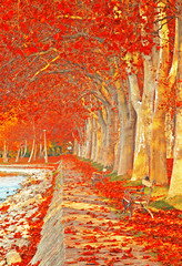 Street with leaves