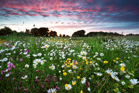 summer wildflowers at dramatic sunset
