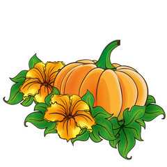 Pumpkin and flowers isolated
