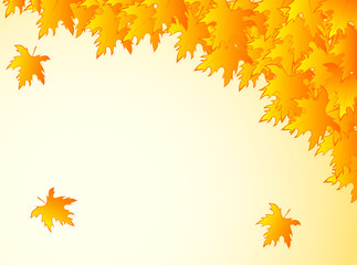 background in warm colors with yellow maple leaves.