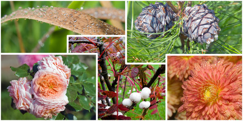Details of autumn nature in collage