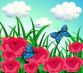 Butterflies in the meadow