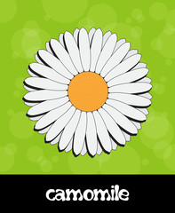Vector summer background with flower (camomile)