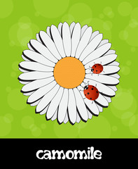 Vector summer background with flower and ladybug